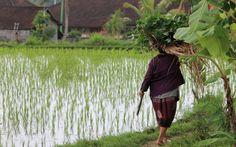 bali-indonésie