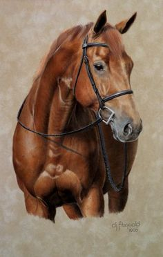 Pastel horse drawing by Debi Fitzgerald - Pferd Horse Drawings, Animal Drawings, Art Drawings, Pretty Horses, Beautiful Horses, Animals Beautiful, Arte Equina, Horse Artwork, Horse Portrait