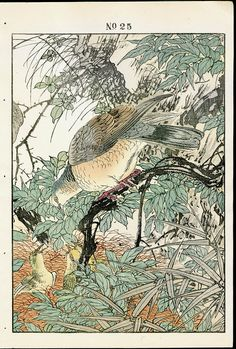 Antique prints of Doves, Young, Spring from 1891 Keinen Imao Woodblock 1st Edition Birds & Flowers Japan