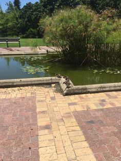 Cute duckie spotted. South Africa, Sidewalk, Outdoor Decor, Walkways, Pavement