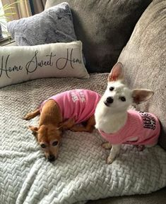 """I ordered these two shirts as a surprise for the family that adopted from our rescue.  Peppa Roni is a Chiweenie about 7 years old.  She is modeling the Big Sister shirt.  She welcomed into her home little Chantilly (Tilly) Lace who is..."" - Colleen B. Dog Boutique, Sister Shirts, 7 Year Olds, Dog Shirt, Terrier Mix, Pet Products, Little Sisters, Cute Dogs, Modeling"