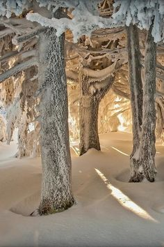 packlight-travelfar:via500px / Winter light by Joris Kiredjian