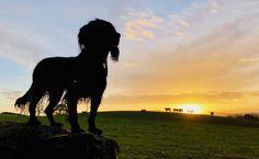 Sunrise at Coldstream by Huggis #ErnstStrasser #Schottland #Scotland