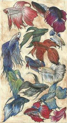 betta art! I love. I should exercise  my water color skills and do something like this.