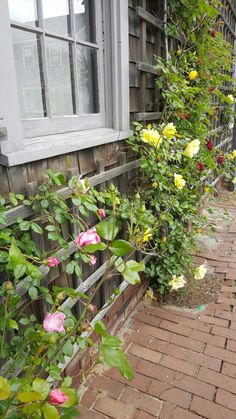 One of our favorite sidewalks late Spring on Nantucket  ...