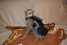 "Any amateur can slap a costume on their dog, but look! Bespoke, fully-articulated,  leather BATTLECAT ARMOUR, modeled by Selani the 9-pound Savannah Cat, and crafted by her handmaiden Schnabuble. ""She seems to genuinely enjoy wearing it- purring and actively modeling. I think she also appreciates the extra insulation the leather offers, because she is a total heat-whore and likes being very warm."" You know you want the rich detail that is AT THE CLICK!"