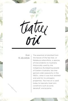 Wellness Encyclopedia: All About Tea Tree Oil + Hydrating Hair Oil DIY