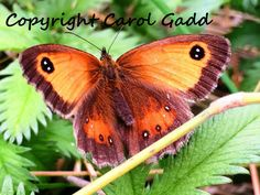 Butterfly, original photography print, nature, countryside, British, collectibles by ByGaddArtandDesign on Etsy