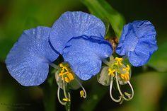 Iowa Wildflowers....