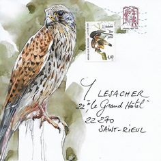 """Yann Lesacher is an artist who lives in Brittany, France. He is working on an ongoing project """"Feathere. Watercolor Animals, Watercolor And Ink, Watercolor Paintings, Sound Art, Envelope Art, Bird Artwork, Artist Sketchbook, Wildlife Art, Mail Art"""