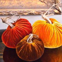 Handmade with real pumpkin stems! Every velvet pumpkin is unique, and uses high quality fabric with real pumpkin stems. Velvet Pumpkins, Fabric Pumpkins, Fall Pumpkins, Carved Pumpkins, Pumpkin Stem, Pumpkin Crafts, Fall Crafts, Holiday Crafts, Diy Crafts