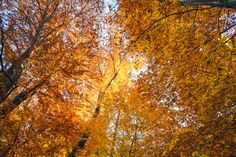 Sunshine in the Autumn Forest Autumn Forest, Bern, Sunshine, Clouds, Outdoor, Outdoors, Outdoor Games, Outdoor Living