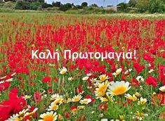 Mina, Flowers Nature, Make A Wish, Holidays And Events, Happy Day, Reflection, Greece, Diy And Crafts, Projects To Try