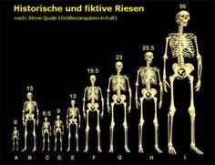 DieBibel-DieWahrheit - Angebliche Funde von Riesen