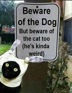 20 Funny Animal Humour Pictures animals I laughed so hard at this one! 20 funny animal humor pictures Animals that I laugh about so much! Funny Animal Jokes, Animal Humour, Funny Cat Memes, Cute Funny Animals, Funny Animal Pictures, Funny Humor, Funny Stuff, Hilarious Pictures, Funniest Animals