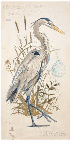 Great Blue Heron detail Art Print by Chad Barrett Watercolor Bird, Watercolor Paintings, Watercolors, Chad Barrett, Heron Tattoo, Blue Heron, Poster Prints, Art Prints, Detail Art