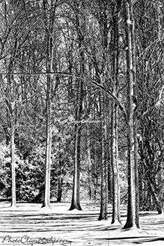 Sentinels in the Snow/Evocative Winter Scene/Landscape, Nature/Fine Art Photography Print Edgar Degas, Winter Scenes, Fine Art Photography, Life Is Good, Snow, Wall Art, Landscape, Amazon, Abstract