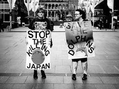 Save The Dolphins - Sydney, Australia - Activismo / Activism