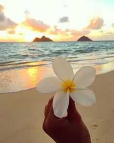 Aloha! #Aloha Ahhhh just came from beach therapy in this paradise