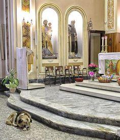 Este perro va todos los días a la iglesia. Cuando descubrí el porqué no pude contener las lágrimas... - Todo Positivo