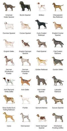 thundershirt for dogs instructions