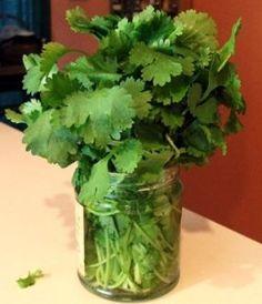 Débrouille - Coriandre : Pour garder des feuilles de coriandre, il suffit de pratiquer deux choses très simples : 1. Placez-la coriandre dans un pot de confiture vide rempli d'eau. 2. Reco