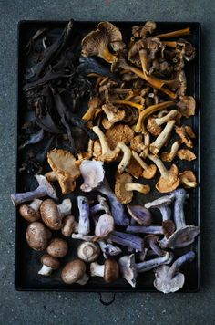 Wild mushrooms with quentin bacon. Zippertravel.com Digital Edition