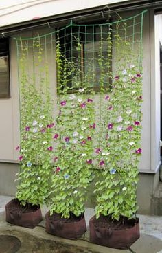 cheap brand -retail garden trellis netting/plants climbing n. -Wholesale cheap brand -retail garden trellis netting/plants climbing n. Garden Types, Diy Garden, Garden Trellis, Garden Projects, Outdoor Projects, Herb Garden, Garden Vine Ideas, Cheap Garden Ideas, Plant Trellis