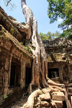 1.Ta-Prohm-temple-Cambodia