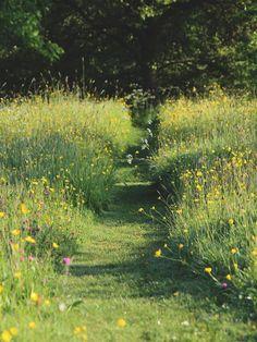Bloemenweide Meadow Garden, Dream Garden, Wild Flower Meadow, Wild Flowers, Back Gardens, Outdoor Gardens, Pasto Natural, Landscape Design, Garden Design
