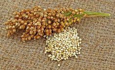 Quinoa - Gesundes Eiweiss in Hülle und Fülle