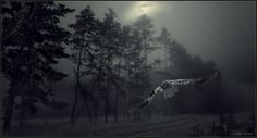 Dark forest by Vadim Trunov, via 500px