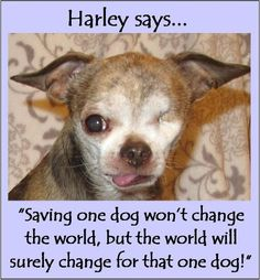 perfect philosophy for animal rescue