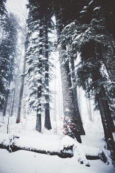 Image discovered by ༄Sandra༄. Find images and videos about winter, snow and tree on We Heart It - the app to get lost in what you love. Snow Photography, Mountain Photography, Travel Photography, Landscape Photography, Winter Scenery, Winter Trees, Snow Trees, Snowy Forest, Dark Forest