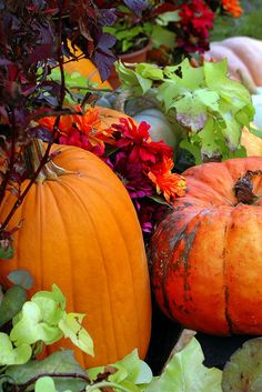 Fall Decorations   Beautiful colours!
