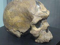 Dichos fósiles han sido datados con una antigüedad de unos 158.000 años, es decir del Pleistoceno Medio. El descubrimiento ha suscitado alguna polémica entre los investigadores. Varios consideran a Homo sapiens idaltu como una subespecie extinta de Homo sapiens y es por esto que se usa la denominación taxonómica trinomial.