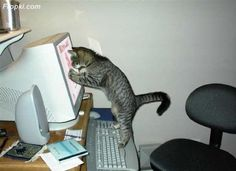 cats on computers pictures | Need help with your computer, or a program on it? We can help! Custom ...