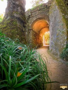 Sintra Landscape Photography Gallery and Online Shop Portugal, Beautiful Castles, Photography Gallery, Landscape Photography, Arch, Castles, Forts, Fortaleza, Romans