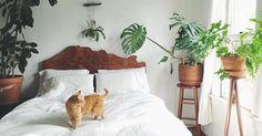 Egal ob ihr nach Zimmerpflanzen sucht, die in eurem eher dunklen Schlafzimmer überleben oder ob ihr Pflanzen sucht, die euch tatsächlich...