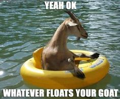 Whatever floats your goat!