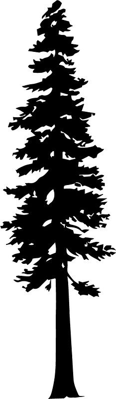 Image Result For Redwood Silhouette Tree Silhouette Redwood Tree Silhouette Images