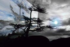 Sechelt Tree Moon by Elaine Hunter Photography