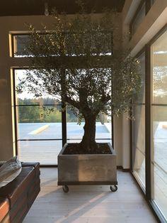 Villa Fares. J.Israelson / NorraGotland Atrium, Villa, Windows, Interiors, Architecture, Arquitetura, Interieur, Interior Decorating, Villas