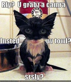 #kittens #cats #pets #cute #animals #funny