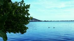 Ducks on Indian River Lagoon in Melbourne, Fl.