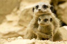Google Image Result for http://4.bp.blogspot.com/-QwlIX01ScXc/UBe5es1oN1I/AAAAAAAAJ_4/okS_Vk8497Q/s1600/cute-animals-3071.jpg