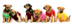 Puppies in Jumpers!