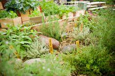 Ms Gerold's garden