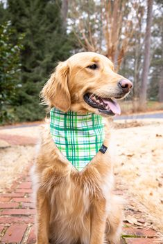 Cute Dog Bandana, Plaid Dog Bandana, Dog Bandana, Handmade Dog Bandana, St. Patrick's Day Dog Bandana, Dog Mom, Cute Dog Accessories, St. Patrick's Day 2021, Tails Up Pup, Tailsuppup, Cute Dog, Golden Retriever, Dog Photo Ideas