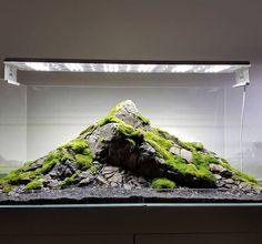 What Is Aquascaping? Aquarium Aquascape, Aquascaping, Aquarium Landscape, Nano Aquarium, Home Aquarium, Nature Aquarium, Aquarium Fish Tank, Fish Tank Terrarium, Aquarium Terrarium